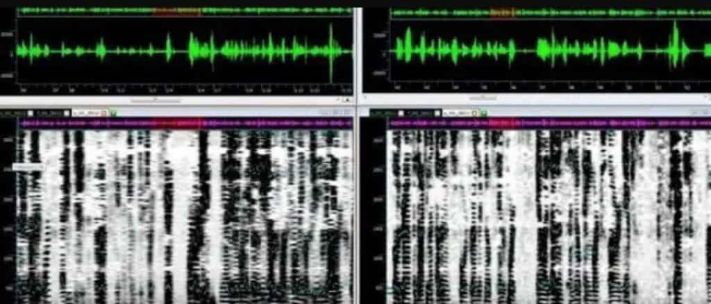 Voice Identification